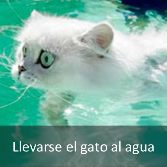 LLEVARSE EL GATO AL AGUA