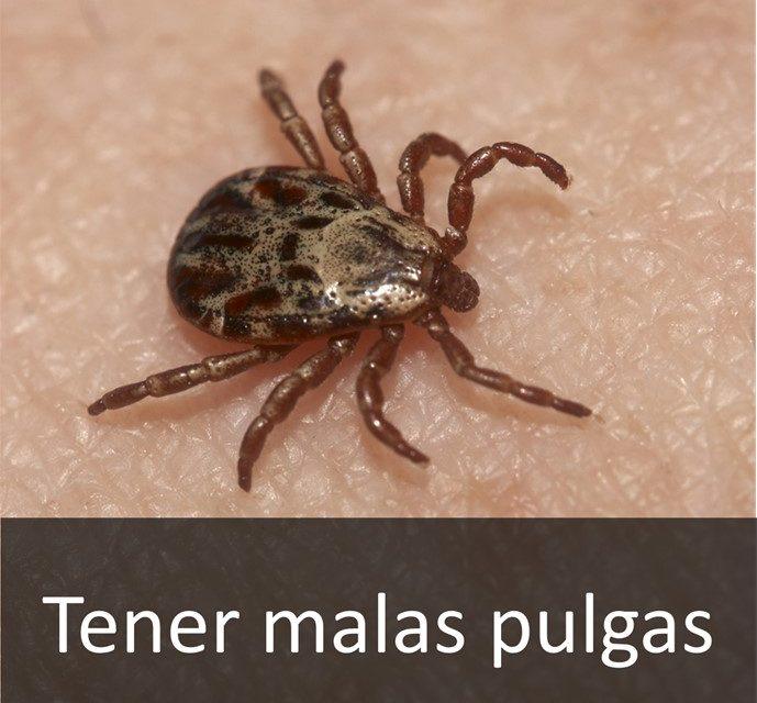 TENER MALAS PULGAS